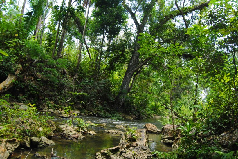 Strengthening Institutional Capacities for Effective Protected Areas Management