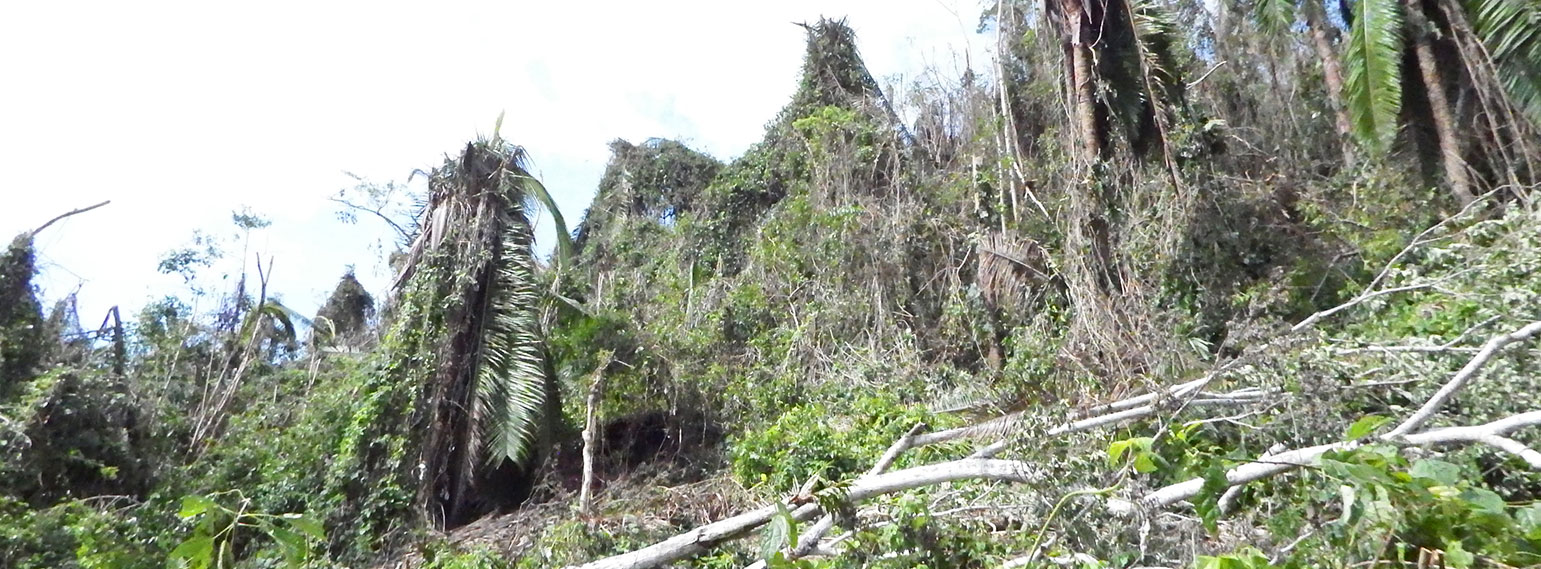 hurricane-earl-belize-protected-areas-1